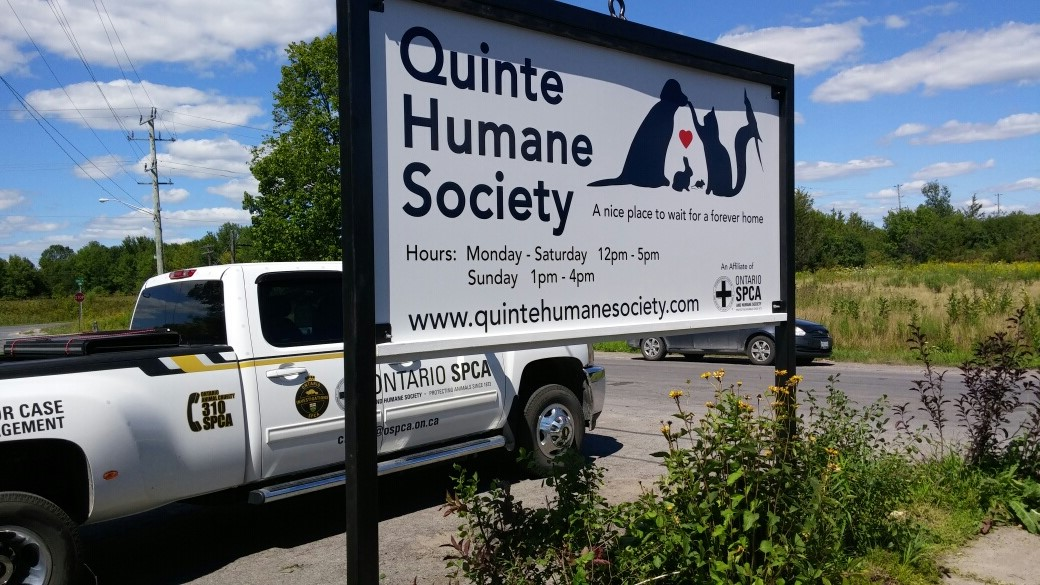 Quinte Humane Society Dogs For Adoption