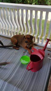 found-dog-July-15-2016-Bensfort-Road-25
