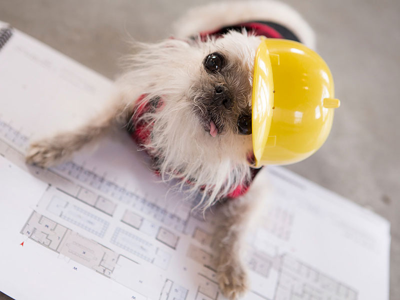 Owen in Construction Hat