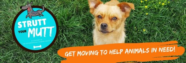 get moving while helping animals in need!@